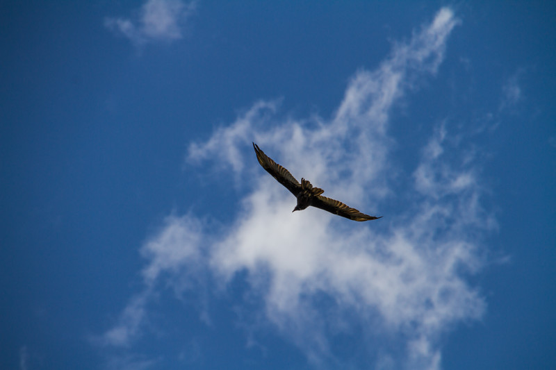 Low angle view of kite flying against sky - USA - Colorado