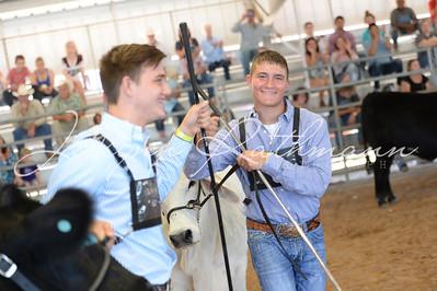 Junior Breeding Heifer Showmanship
