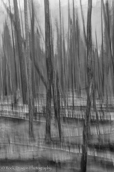Kootney_Plains-103.jpg