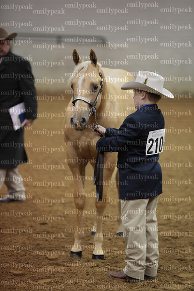 2013 Dixie National QH Show Candids
