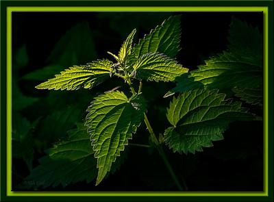 Leaf, Grass and Bush