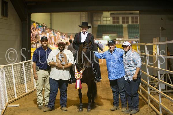 Performance Amateur 5&6yr Stallions