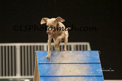 TLC AKC Time to beat. Friday Aug 2012