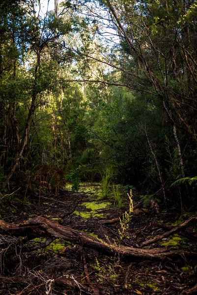 Tasmania-64.jpg