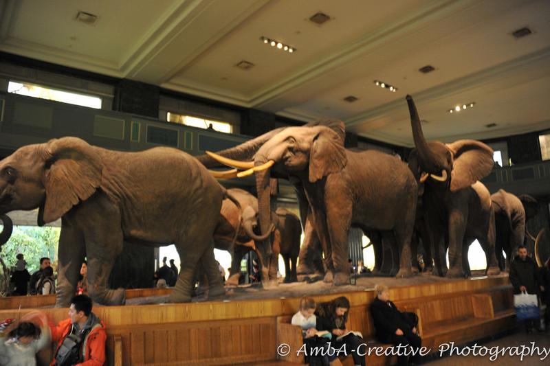 2013-12-30_AMNHMuseum@NewYorkNY_27.jpg