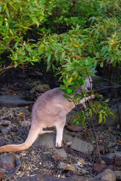 Australia_492.jpg