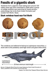 fossil-from-20foot-shark-found-outside-of-fort-worth
