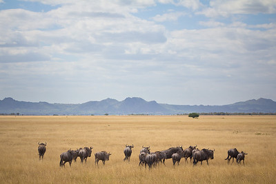 Serengeti National Park 1 (TZ)