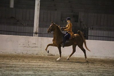 65. Juvenile 5-Gaited