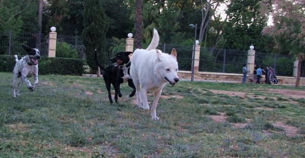 5 - 25 -2010 Ayora Dog Park