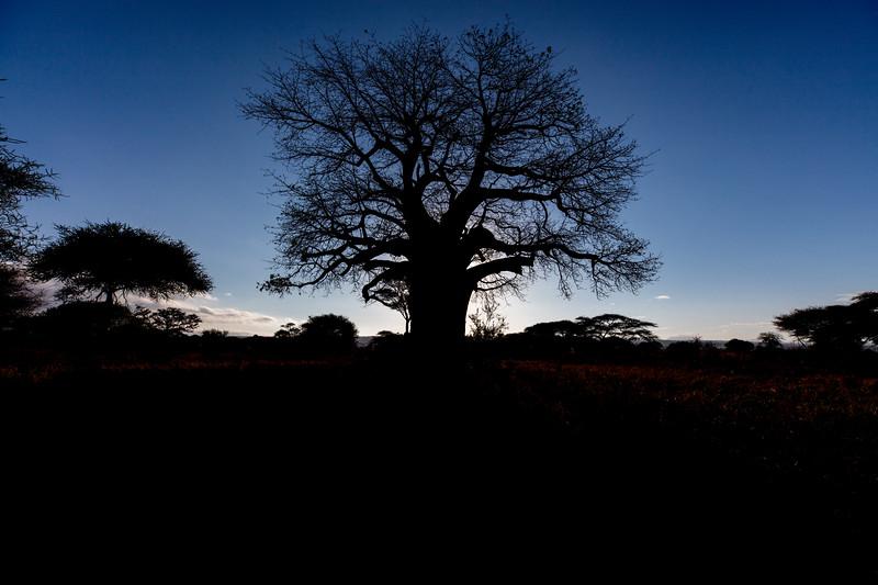Africa - 102116 - 8064.jpg