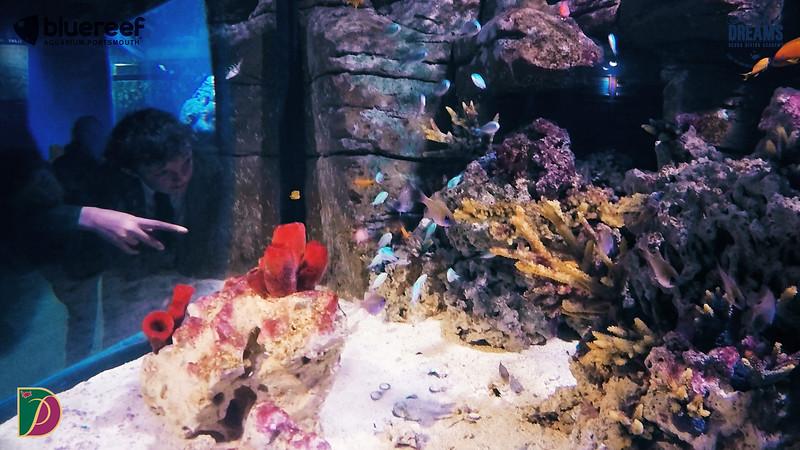 Blue Reef.00_12_29_21.Still014.jpg