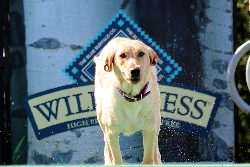 2015.8.5 Winnebago County Fair Dock Dogs (29).JPG