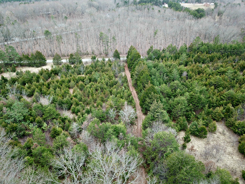 Tract 4 - entrance from Roark Mill Rd; front 10ac in young pine