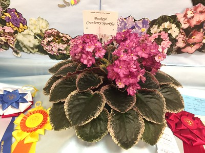 African Violet Society of America Convention 2017