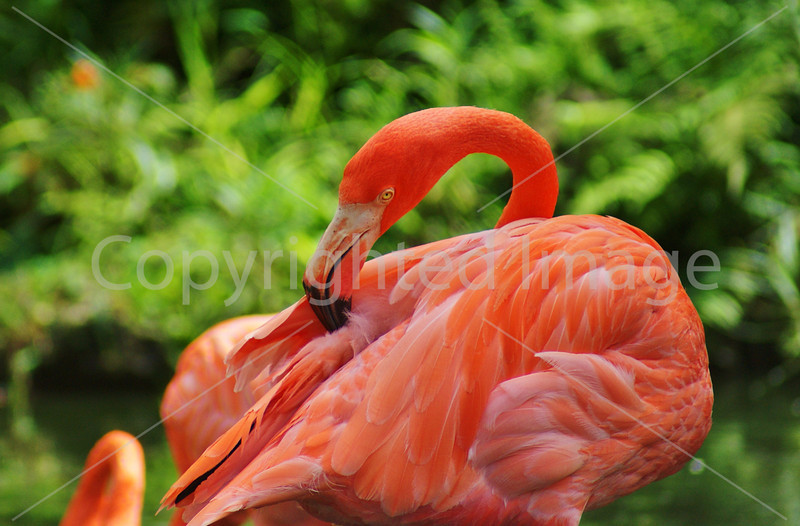 #27 Flamingo.JPG