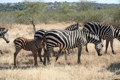 Akagera Safari, July 2010