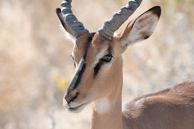 Der dritte Tag im Etosha Reservat