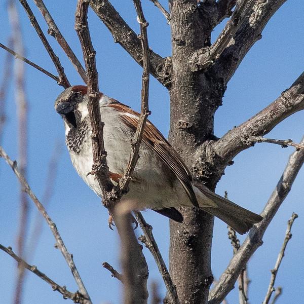 sparrow-0044.jpg