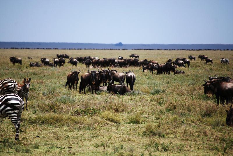 Serengeti (55).JPG