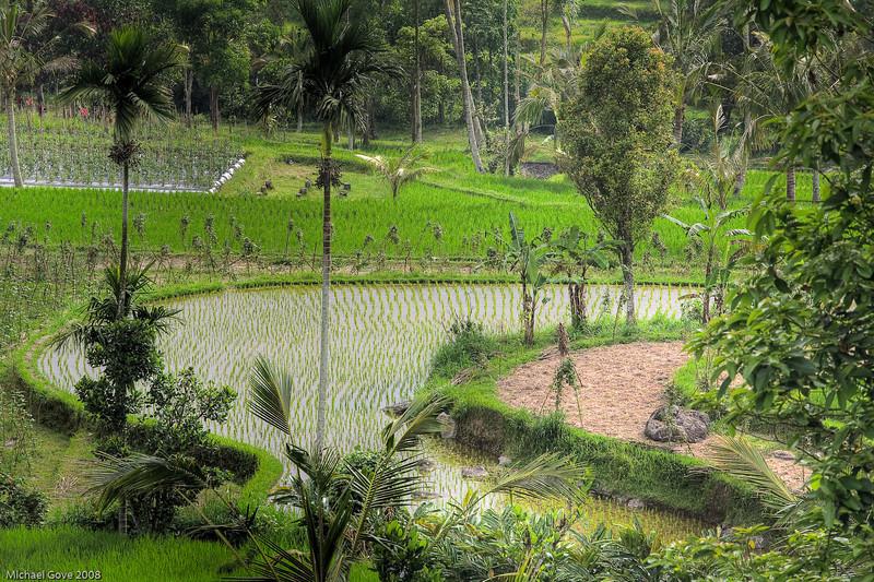 Rice field terraces, Bali