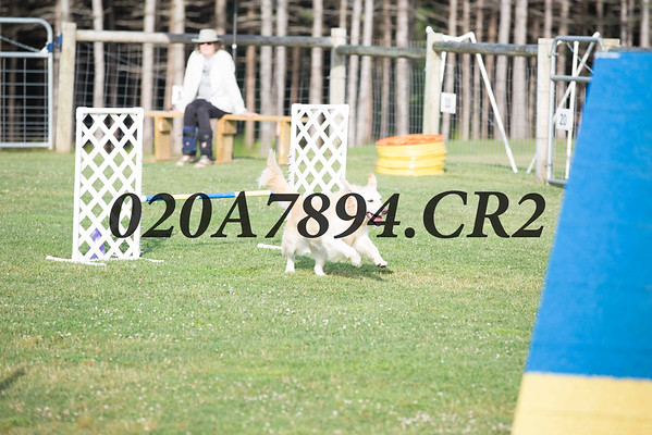 Peck Meadow Agility Trials - July 23, 2016