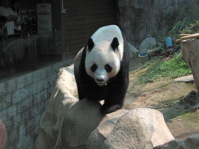 Chiang Mai Zoo/ Aquarium