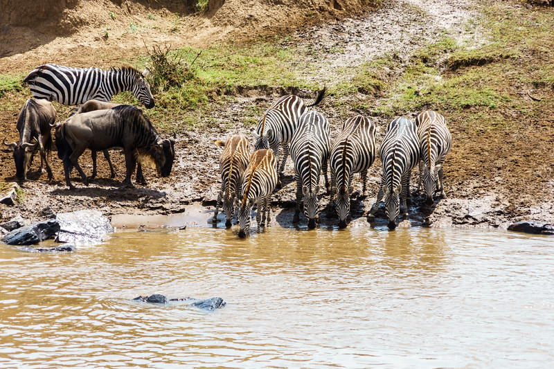 Kenya 2015-06711.jpg