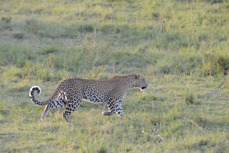East Africa Safari 169.jpg