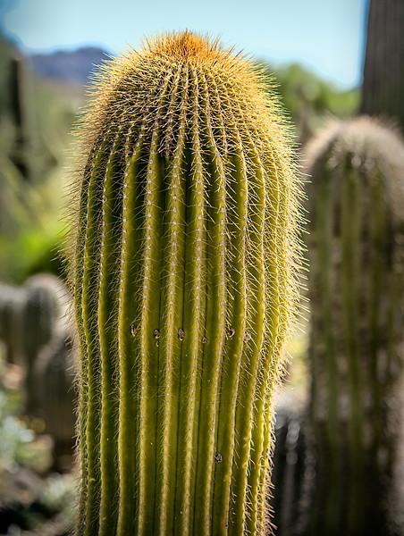 2017-10Oct-Tucson-208-Edit.jpg