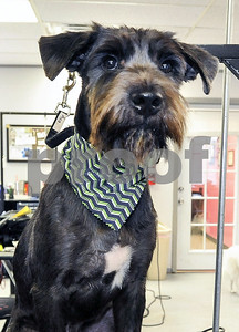 snobby-dog-spaw-gives-shelter-pups-makeovers-to-help-them-get-adopted