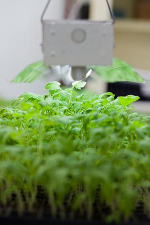 04.05 Seedlings