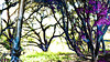 Post Apocalyptic Oak Trees: Filename: 20100313-_1280656
