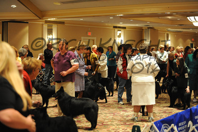 Best Of Breed: Dogs In The Ring