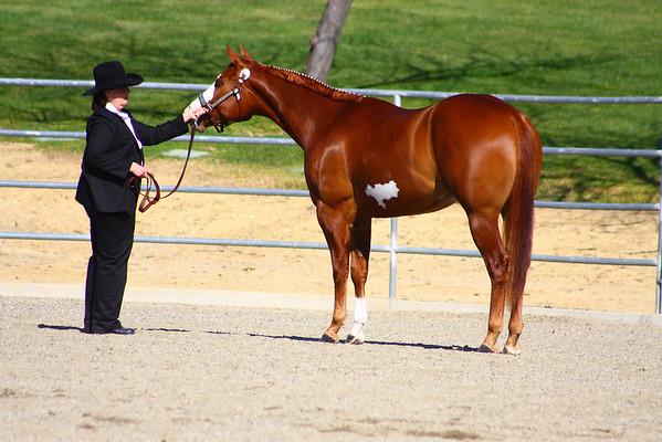 McCoy Equestrian Center