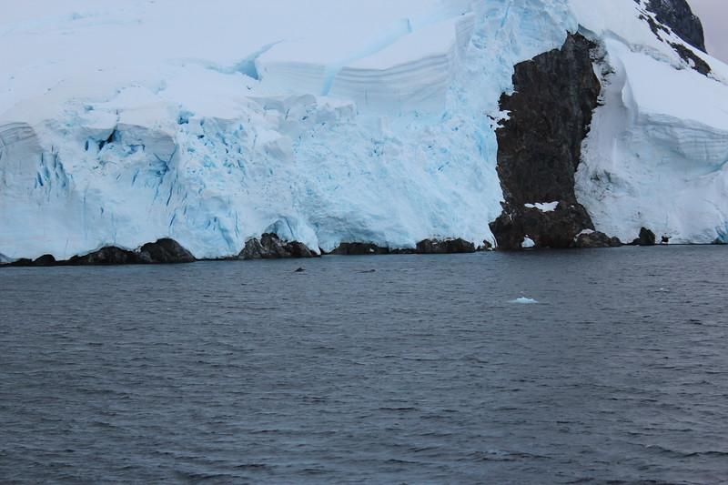 Antarctica 153.JPG
