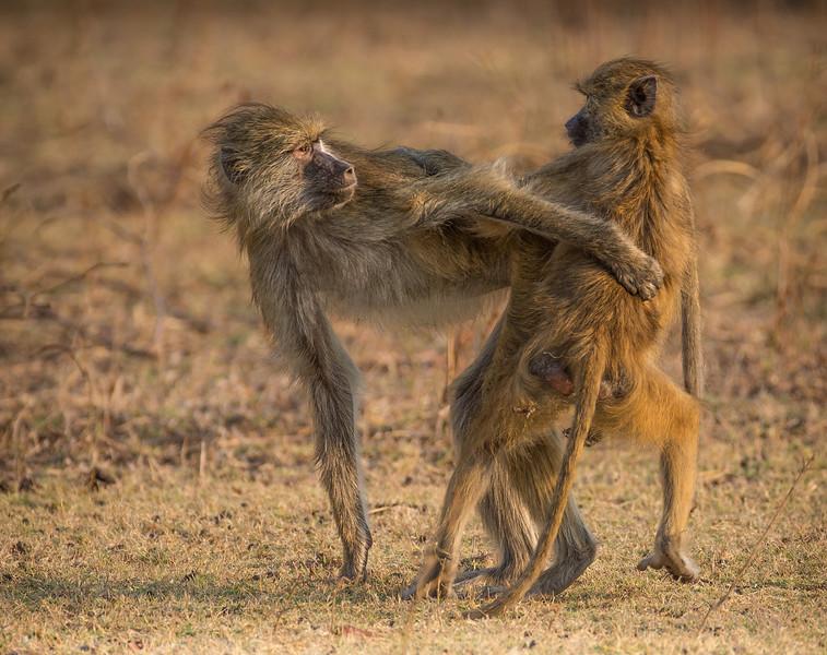 Annie Nash baboon hug-.jpg
