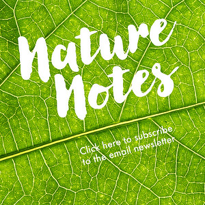 Subscribe to Nature Notes