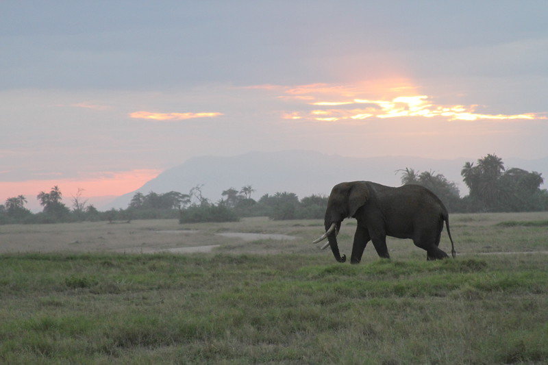 Kenya 2019 #2 1663.JPG