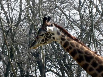 Nashville Zoo - March 2007