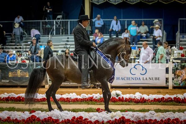 291-Fino Stallions 7 Years and Older