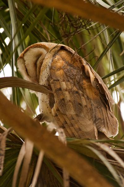 Owl - Barn - Lynn Haven, FL - 01
