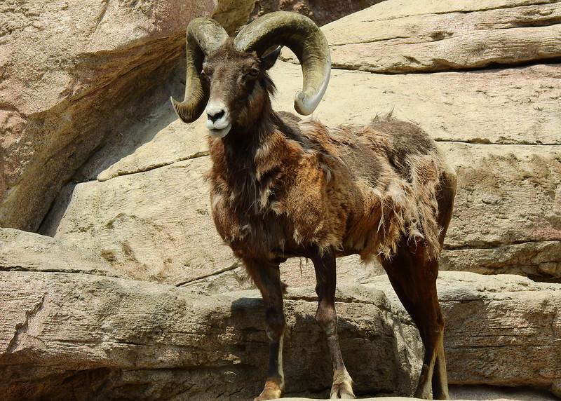 Denver Zoo 2018 (3154).JPG