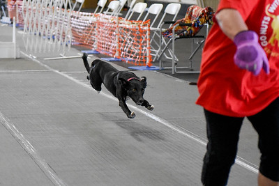 2018 MIM Flyball Tournament - Friday