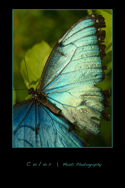 Color-BlueBorder.jpg
