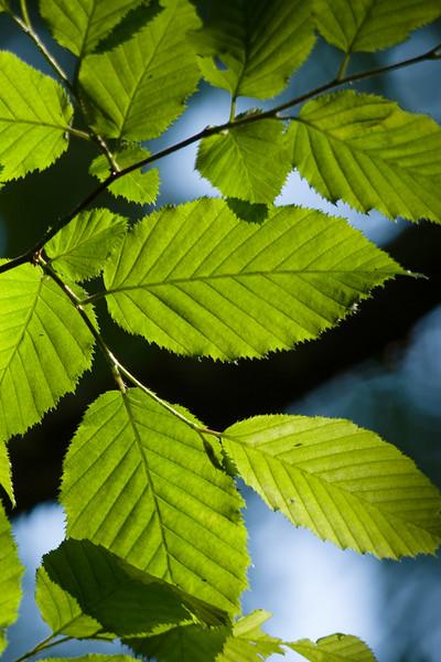 Trees, Foliage, Plants