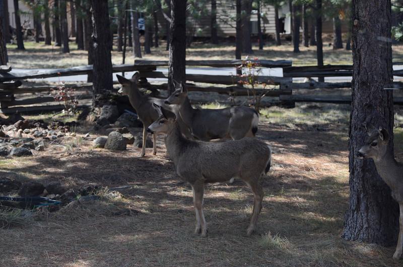 deer_DSC3776.jpg