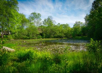 buttonwood Park