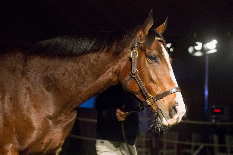CTS Mare & Fillies For Stud Select Sale 2016