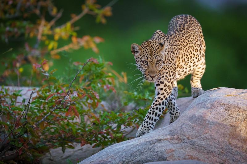LeopardHills-20191029-2448.jpg